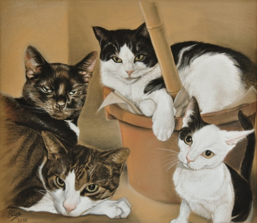 4 generaties katten in memoriam